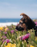 Dog in Flowers by Ocean