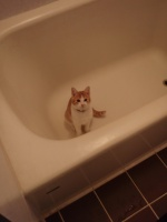 Blossom in Tub