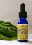 Spinach Essence 1/2 oz. (15 ml.)