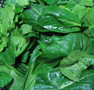 MFE-Spinach0046967